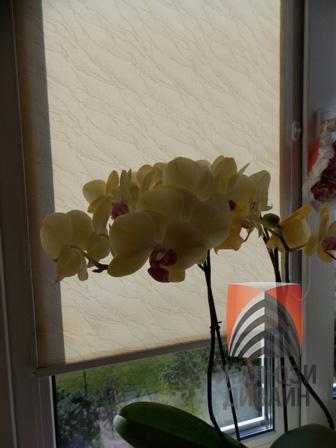 Орхидеи на южных окнах не могут без рулонных штор
