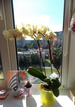 Орхидея получит ожоги без рулонной шторы на окне